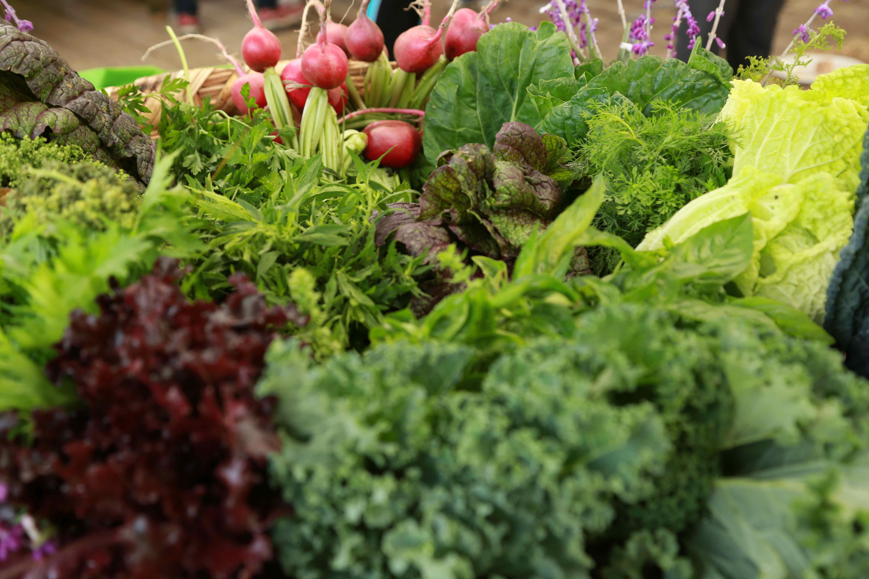 Inicio for Plantas hortalizas ejemplos